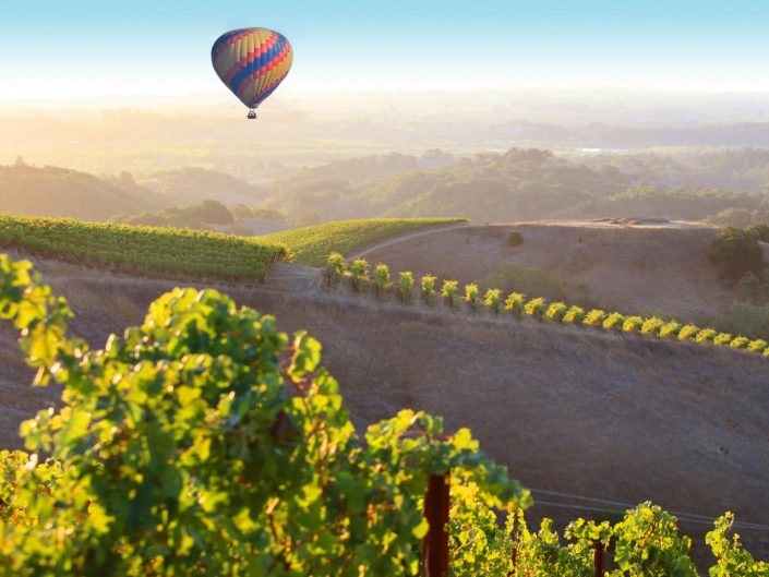 Hot Air Balloon,healdsburg vineyards