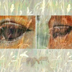 Horse montage,horses in pasture