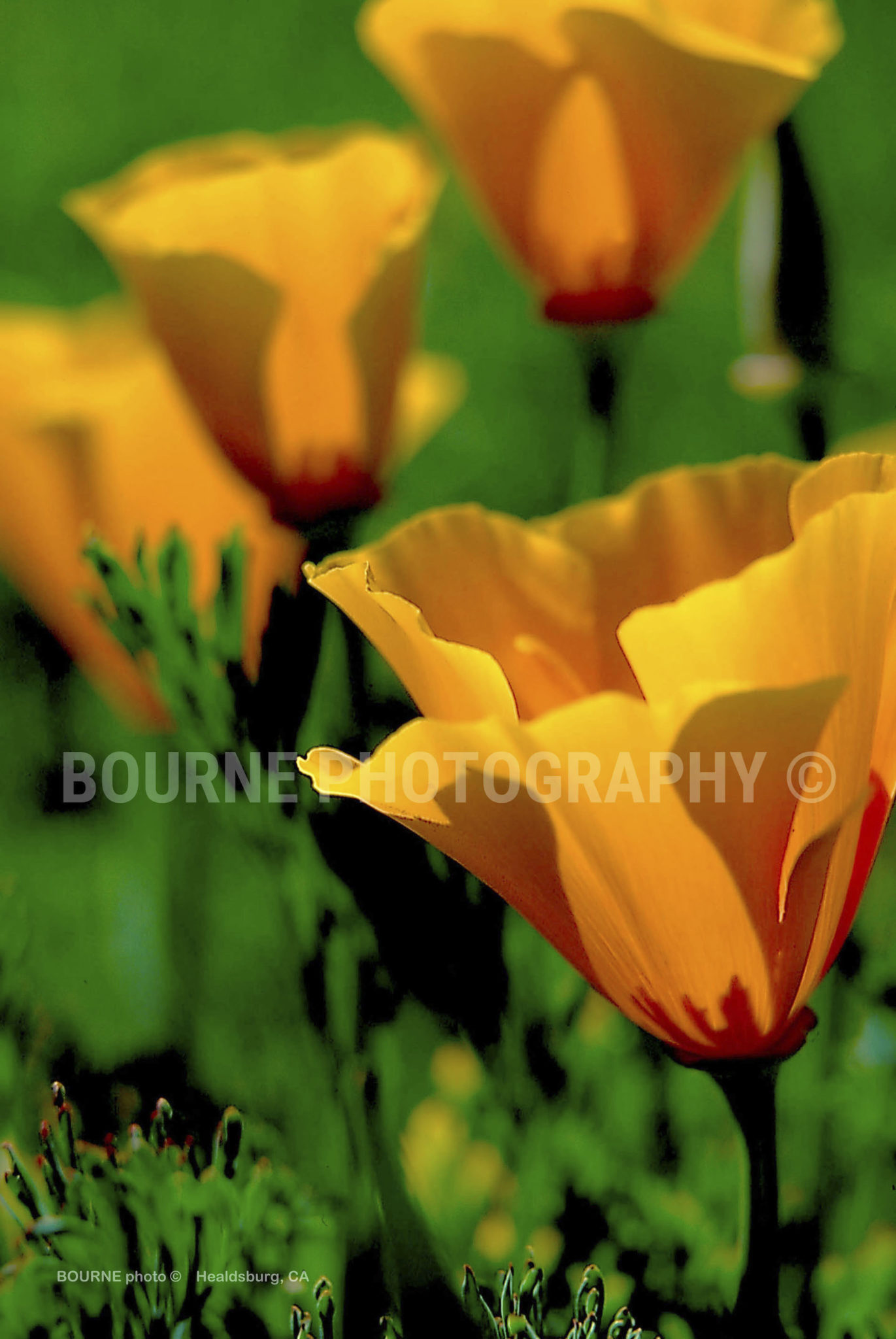 Yellow Flowers Bourne Photography