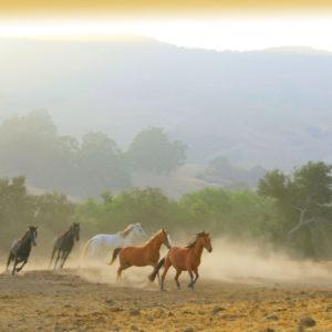 band of running horses