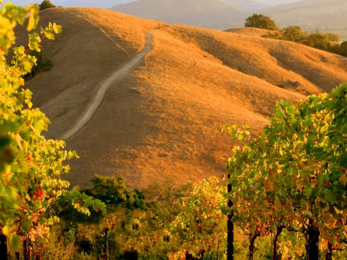 Wine Country of Somoma County