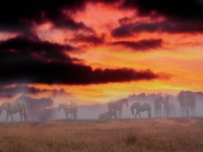 Landscape,horses in sunset, bodega bay horses