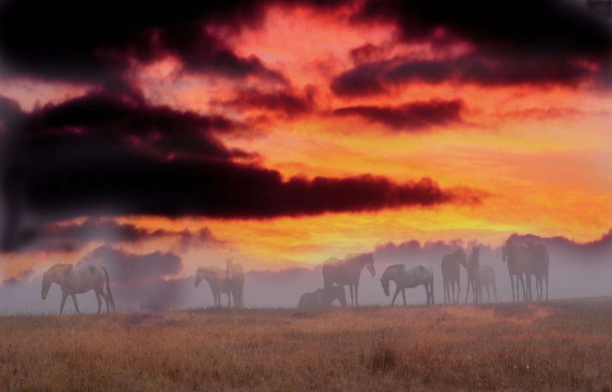 Landscape,horses in sunset, bodega bay horses