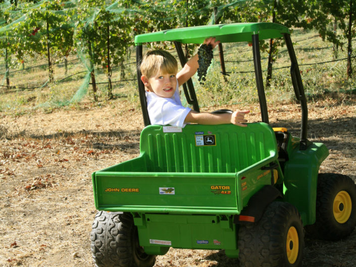 young boy in the vineyards