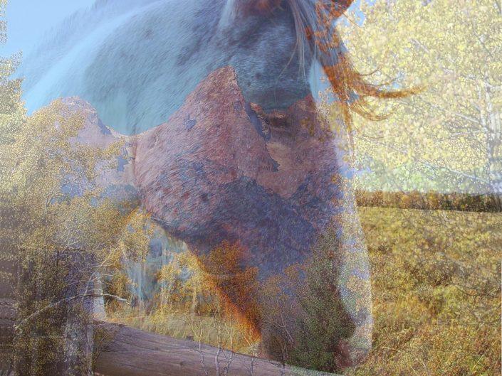 Southwest Horses