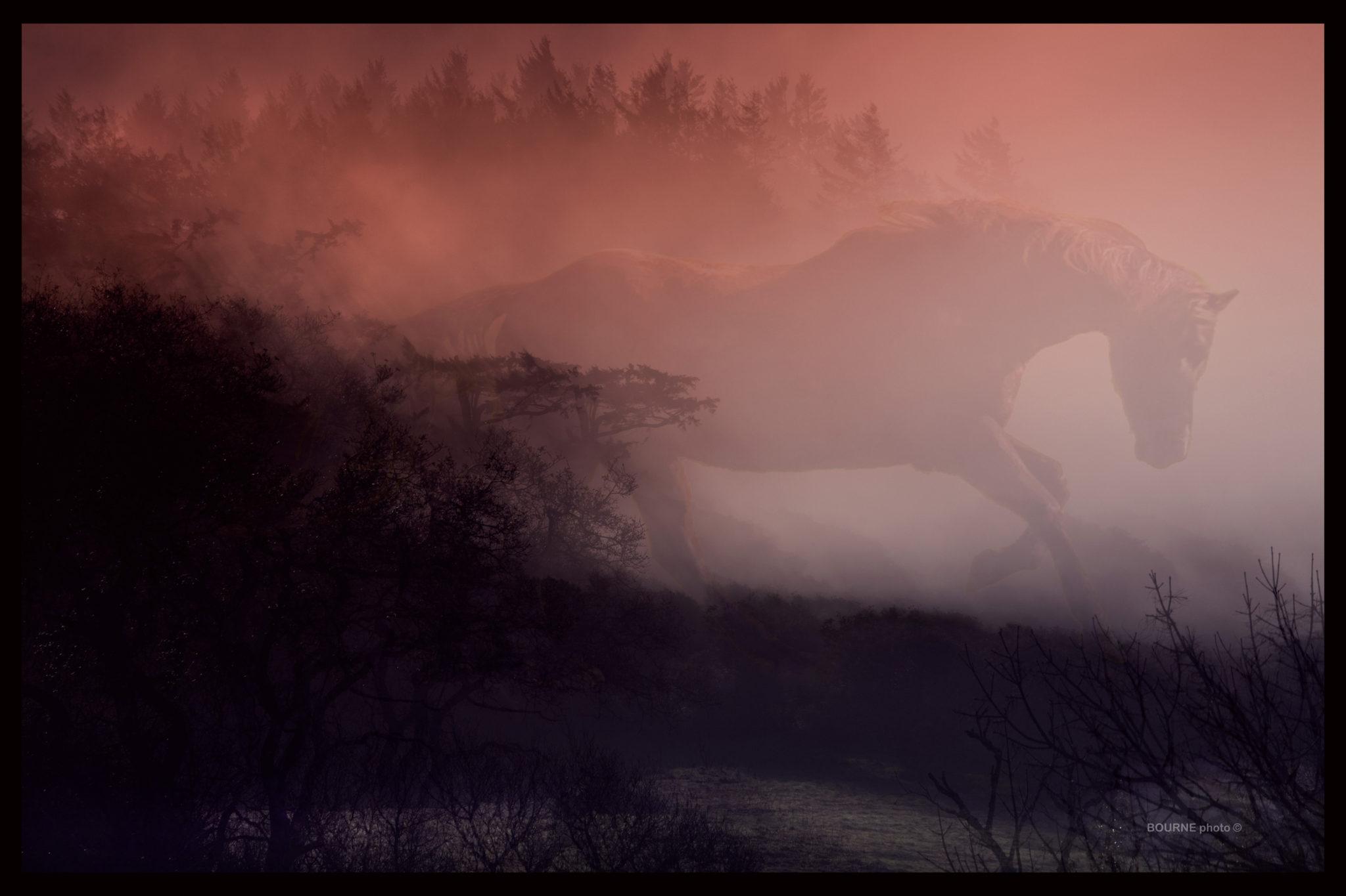Graceful Horse emerging through mist