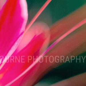 flowers, petals