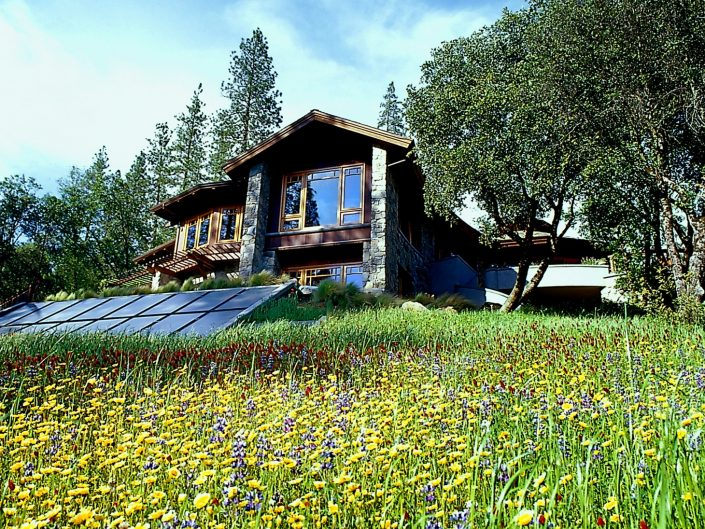 Contemporary Home with Wild Flowers