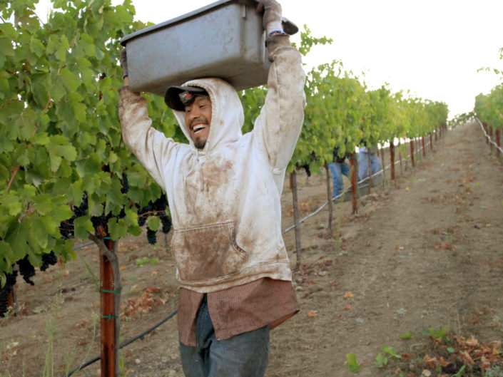 Grape Picker with grapes