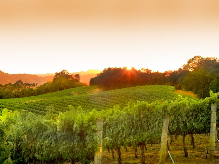 Sunsets, healdsburg vineyard